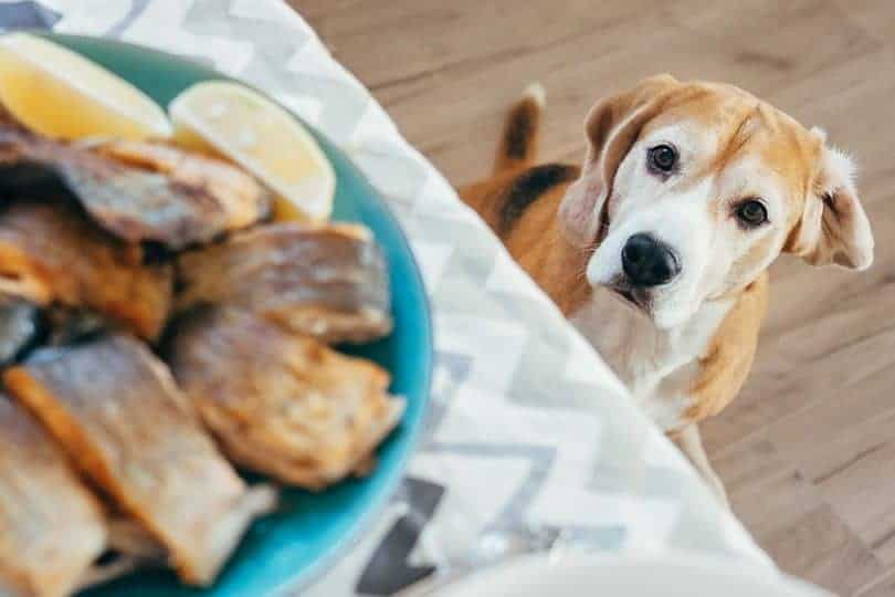 Are Sardines Good For Dogs? Absolutely