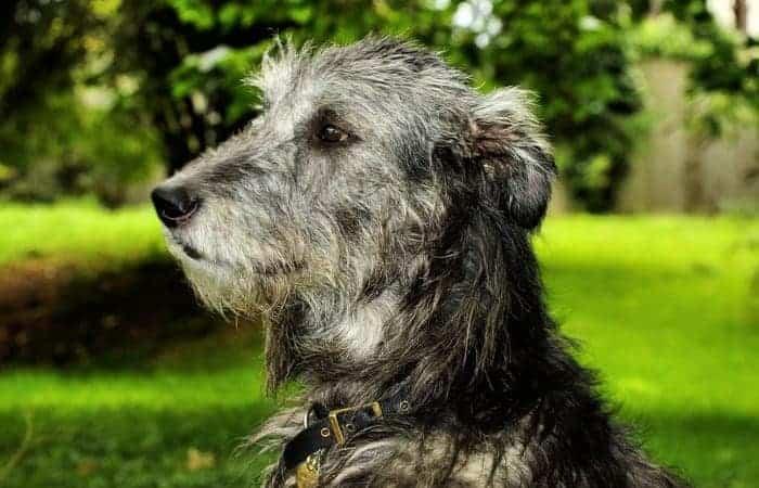 Osteosarcoma Small Dogs