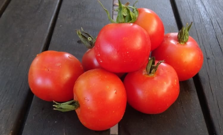 red ripe tomato for dogs